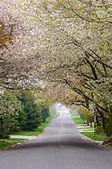 Road in East Hampton Village, Long Island, NY, Long Island, NY