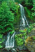 Falls Creek Falls in Summer