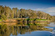Protected bird rookery for Great Blue Herons, Egrets, and Cormorants, Morro Bay, California