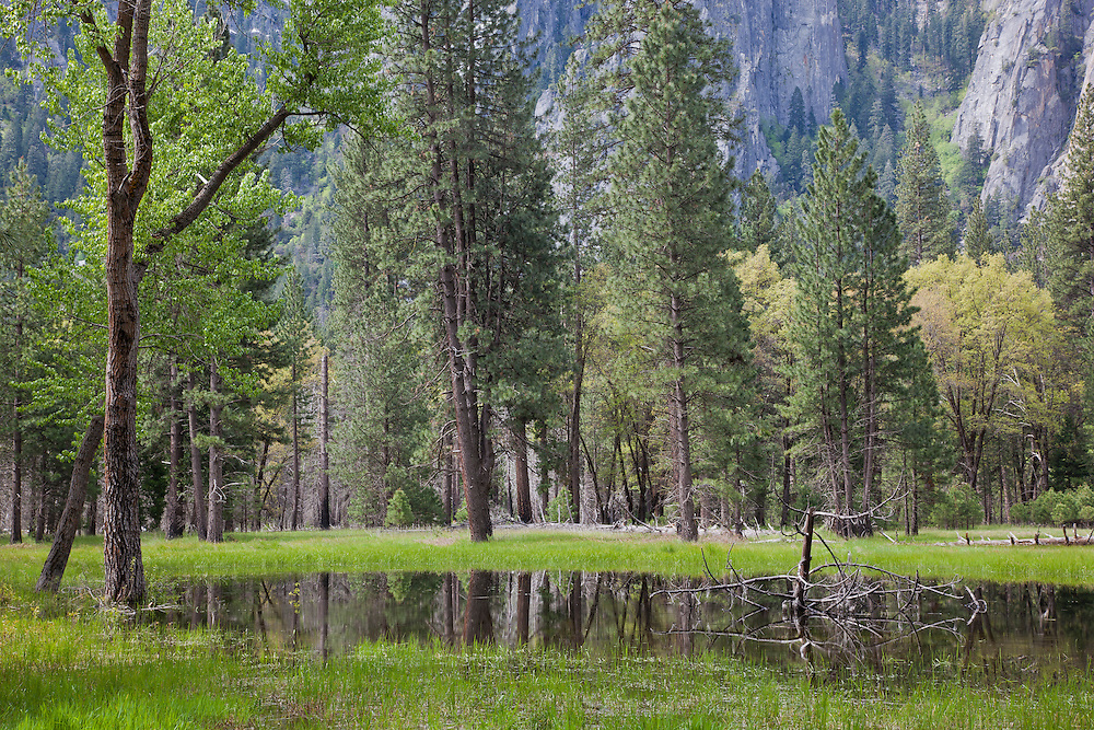 soft reflections of a pond after the rain in yosemite valley during the early fall months