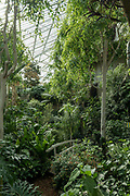 Inside the Barbican Centre conservatory on the 12th September 2019 in London in the United Kingdom.