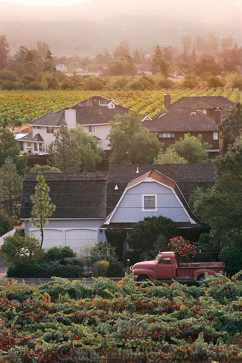 Private residences in the midst of wine grape vineyards. Rural Sonoma County, California.