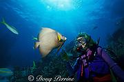 diver with friendly gray angelfish, <br /> Pomacanthus arcuatus, Walker's Cay, <br /> Bahamas ( Western Atlantic Ocean )  MR 89