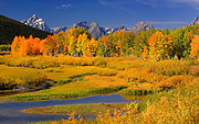 The Tetons range can be seen in the background as the fall colors shine on a sunny day in Grand Teton National Park in Wyoming. Colin Braley