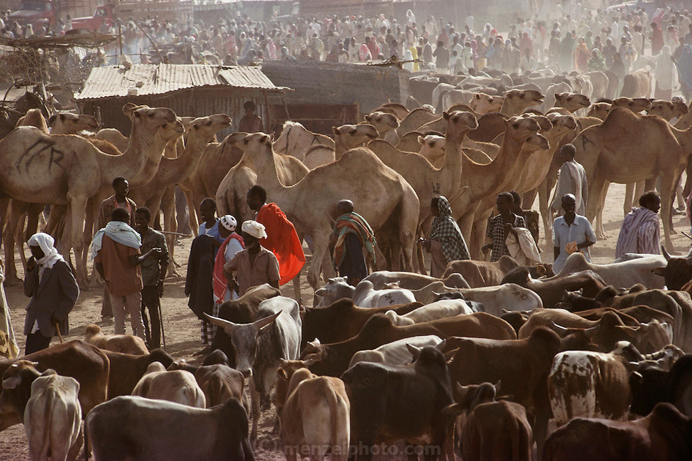 Livestock market with camels, cattle and goats in Hargeisa, Somaliland, an unrecognized breakaway Republic of Somalia. Livestock is the main source of income in Somaliland.  March 1992.