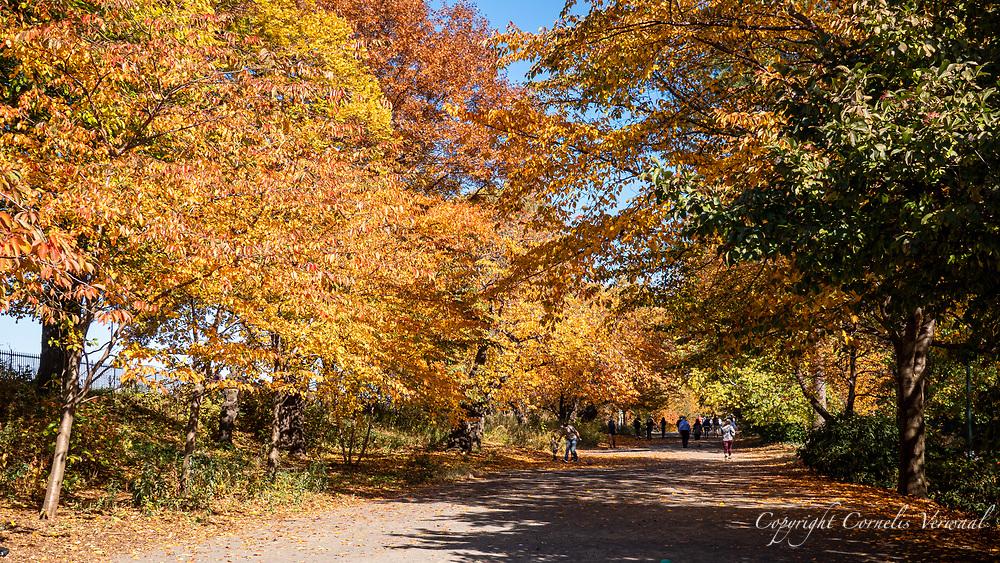 Autumn colors along The Bridle Path in Central Park