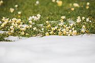 High Line Snow & Blooms