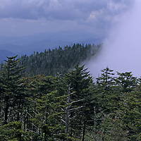 NORTH CAROLINA. Fog rises over forest surrounding overlook at Clingmans Dome, Great Smoky Mountains National Park, Appalachian Mts.