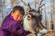 A Tsaatan boy hugging his reindeer (Rangifer tarandus), Khovsgol Province, Mongolia