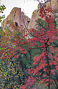 Cliff with Cave and Bigtooth Maple,<br />Cave Creek Canyon, Coronado National Forest, Cochise County, Arizona