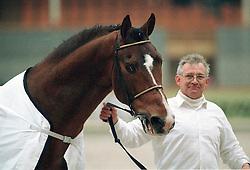 Major de la Cour met Damiaan van Hollebeke<br /> BWP Hengstenkeuring Moorsele 1999<br /> © Dirk Caremans