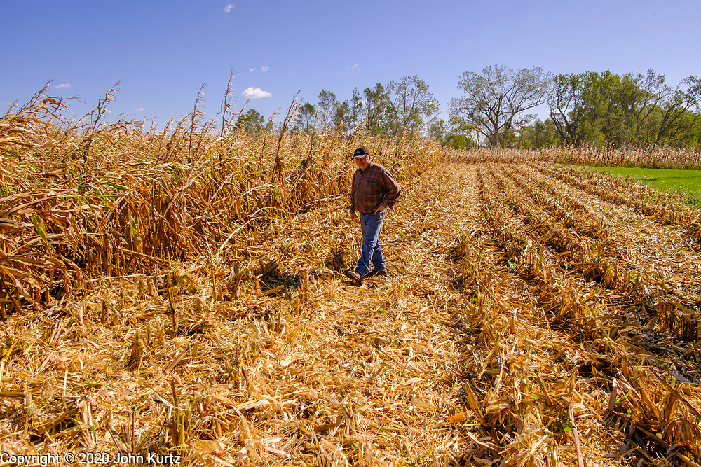30 SEPTEMBER 2020 - WOODWARD, IOWA: A member of a combining crew walks through the cornfield on Lambert family land in Woodward. Kevin Lambert said it would take nearly twice as long to combine this year's corn compared to last year's because of damage to fields caused by the derecho wind storm that roared through central Iowa in August. The derecho wind storm damaged more than 550,000 acres of Iowa cornfields. In addition to derecho damage, Iowa farmers are wrestling with drought related damage. A persistent drought in central Iowa has stunted corn plants and reduced yields. Because of the unusually dry weather, this year's harvest is three weeks ahead of last year's and nine days ahead of average.        PHOTO BY JACK KURTZ        PHOTO BY JACK KURTZ
