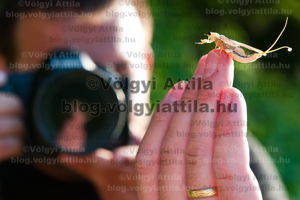 A photographer takes photo of a long-tailed mayfliy (Palingenia longicauda) on the hand of an onlooker during their swarming on the river Tisza in Tiszainoka (some 135 km south-east from Budapest), Hungary on June 12, 2011. ATTILA VOLGYI