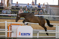 012, Minderella<br /> Nationaal Kampioenschap KWPN<br /> 3 jarige springmerries<br /> © Hippo Foto - Dirk Caremans<br />  15/08/2020