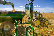 30 SEPTEMBER 2020 - WOODWARD, IOWA: Corn is transferred the combine to a trailer on Lambert family land in Woodward. Kevin Lambert said it would take nearly twice as long to combine this year's corn compared to last year's because of damage to fields caused by the derecho wind storm that roared through central Iowa in August. The derecho wind storm damaged more than 550,000 acres of Iowa cornfields. In addition to derecho damage, Iowa farmers are wrestling with drought related damage. A persistent drought in central Iowa has stunted corn plants and reduced yields. Because of the unusually dry weather, this year's harvest is three weeks ahead of last year's and nine days ahead of average.        PHOTO BY JACK KURTZ