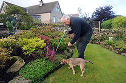 A retired man tidies his garden with his dog, Cumbria, MODEL RELEASED.
