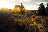 A mountain biker rides the Mill Creek trail in the Targhee National Forest, Wyoming.