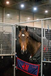 Icos<br /> Jumping Indoor Maastricht 2018<br /> © Hippo Foto - Sharon Vandeput<br /> 25/11/18