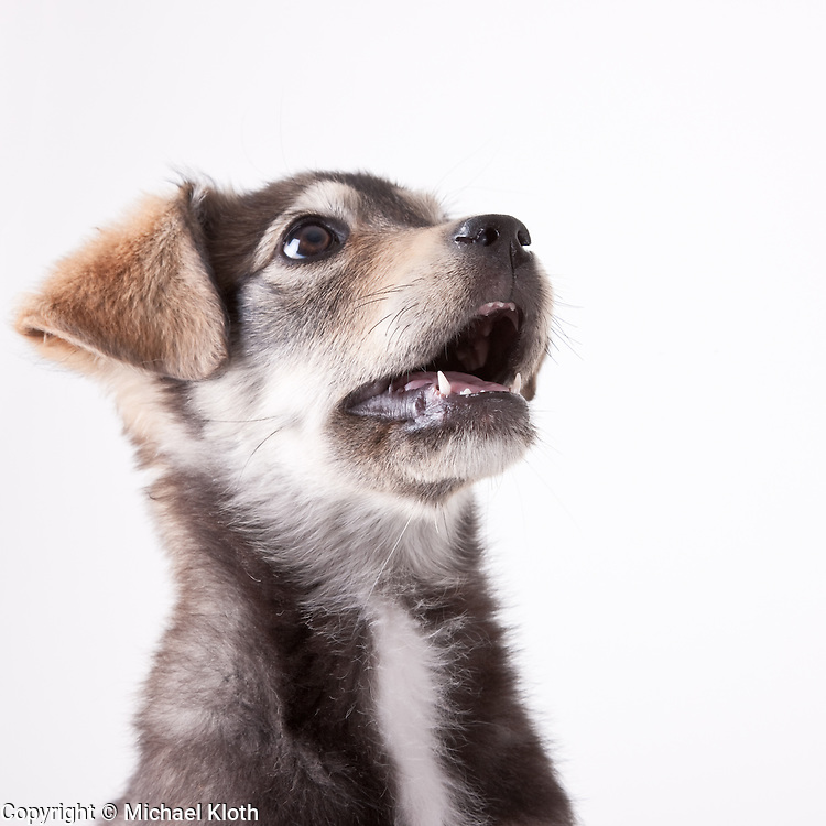 With the exception of Snickers, the dogs photographed on the white seamless were all considered for my Shelter Puppies book.  Some of the images made it into the book and others are being licensed as stock photography.