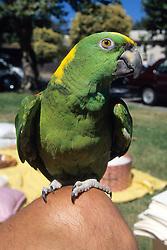 Bird As Pet