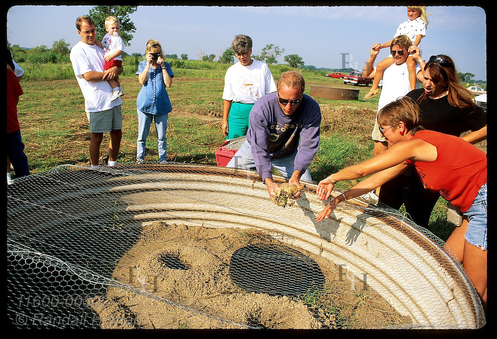 Chris Alley-Grubb, fndr of Prairie Ecosystem Conservation Alliance, releases prairie dogs into covered pen at Quivira NWF, Kansas
