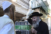 "Israel, Jerusalem, Kaparot (""atonements"") is a disputed ancient Jewish ritual to save oneself from a harsh Heavenly decree by it being effected on another object. Vegetables, fish, money, and most commonly a Chicken have been used throughout the centuries, The service is performed by grasping the object and moving it around one's head three times, symbolically transferring one's sins to the object."