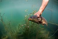 Fisherman with fish, Lake Skadar National Park, Crna Gora, Montenegro