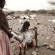 Hawa and Sabira milk a goat to get milk for breakfast. The Afar diet is mainly milk with some rice or bread. All girls go through FGM in Afar, a practise the charity AISDA seeks to eradicate. Afar region, Ethiopia.