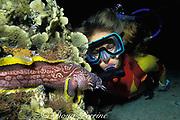 night diver and coral toadfish or splendid toadfish, Sanopus splendidus , ( endemic ) Cozumel, Quintana Roo, Mexico ( Caribbean Sea ) MR 110