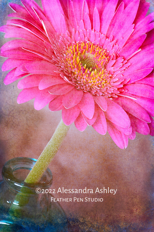 Gerbera daisy with art paper texture, cool hues.
