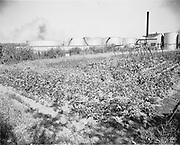 "Ackroyd 22718-2 ""Texaco Inc. copy photos of historical prints of plant. April 24, 1991"" (original print ""Brubaker Aerial Surveys"" #s 38033,38032 dated 1938. (4x5"". DEQ Site ID: 169, Texaco Portland Terminal, 3800 NW St. Helens Rd. also known as Equilon Portland Terminal.)"