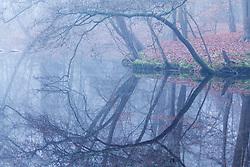 Spanderswoud, '-s-Graveland, Wijdemeren, Noord Holland, Netherlands