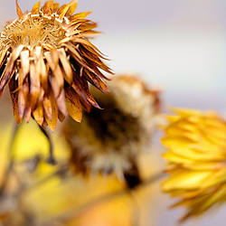 Flowers and Plants Photography by Jaydon Cabe