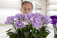 Suntory's blue rose laboratory