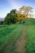 Green hills and hiking trail in spring on Lafayette Ridge, Lafayette, CALIFORNIA
