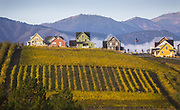 Homes and grapevines on the north side of Lake Chelan, WA. (Ellen M. Banner / The Seattle Times)