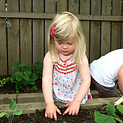 A young girl helping in the vegetable garden at Little Green Rascals Children's Organic Day Nursery, nr Elvington, York, North Yorkshire, UK. Little Green Rascals is a children's day nursery that opened in York in July 2009.  It is the first fully organic day nursery in the North of England and has been awarded the Soil Association's Gold Catering Mark for the last four years.