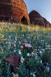 Sunset on beehive-shaped charcoal kilns at Catskill ghost town (Upper Kilns) and small-leafpussytoes wildflowers, Vermejo Park Ranch, New Mexico, USA.