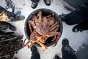 People stand around a bucket of King Crab, caught in a lake at Jarfjord, near Kirkeness in Finnmark region, northern Norway