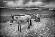Engeland, England, 15-8-1990Straatbeeld. Reisreportage door het zuiden van Engeland. Natuurgebied, natuurreservaat, in Dartmoor . Wilde paarden in een leeg en woest landschap, natuurlandschap .Foto: Flip Franssen