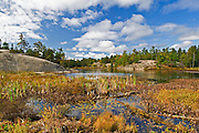 Wetland in autumn<br /> Grundy Lake Provincial Park<br /> Ontario<br /> Canada