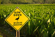 Close up picture of a wildlife crossing sign in Hanalei, Kaui, Hawaii to protect the State Bird of Hawaii, the Nene.