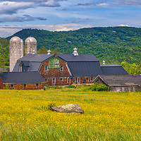 New England photography of a country farm and yellow flower filed with the beautiful White Mountains in the  background. Photograph taken in Sugar Hill, New Hampshire.<br /> <br /> Beautiful New Hampshire fine art photography of blooming wildflowers and farm in Sugar Hill are available as museum quality photography prints, canvas prints, acrylic prints, wood prints or metal prints. Fine art prints may be framed and matted to the individual liking and interior design decorating needs:<br /> <br /> https://juergen-roth.pixels.com/featured/new-hampshire-country-and-farm-life-juergen-roth.html<br /> <br /> Good light and happy photo making!<br /> <br /> My best,<br /> <br /> Juergen