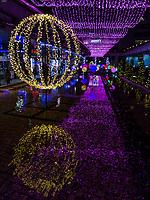 Tokyo Christmas Illuminations at Korakuen