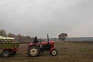 A man drives a tractor with watermelons ready for market, just outside of Warsaw, Poland