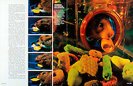 GEO (Germany), 12/1997,  Photography by Heidi and Hans-Juergen Koch/animal-affairs.com