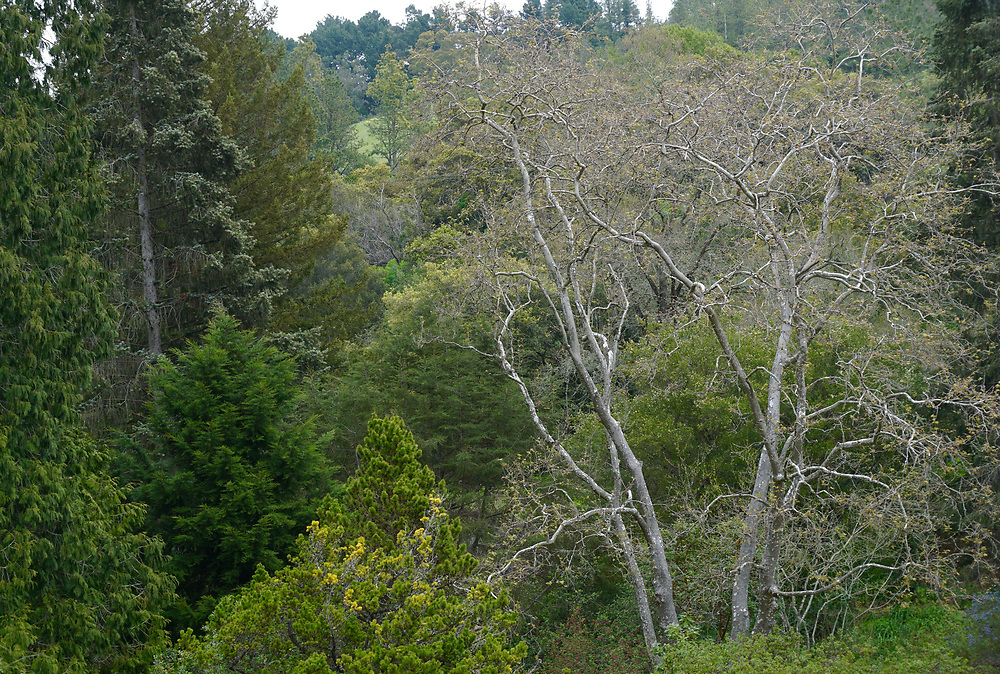 Finley Botanical Gardens, Berkeley, California