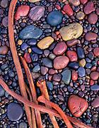 Beach Stones and Kelp,near Shell Beach,Sonoma Coast State Beach, California