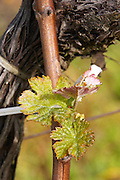 new leaves ch gd barrail lamarzelle figeac saint emilion bordeaux france