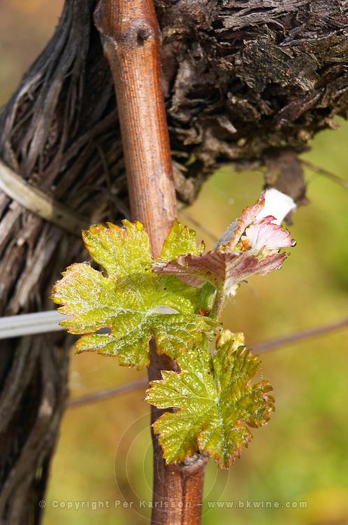 new leaves ch gd barrail lamarzelle figeac saint emilion bordeaux france
